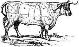 A-Bullock-marked-as-cut-into-joints-by-the-Butcher (1852)