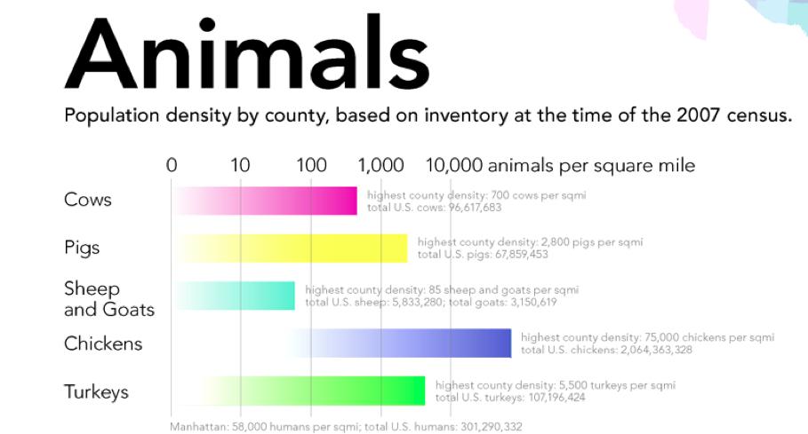 Animals-Legend