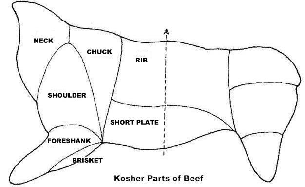 kosher beef diagramcr1.jpg