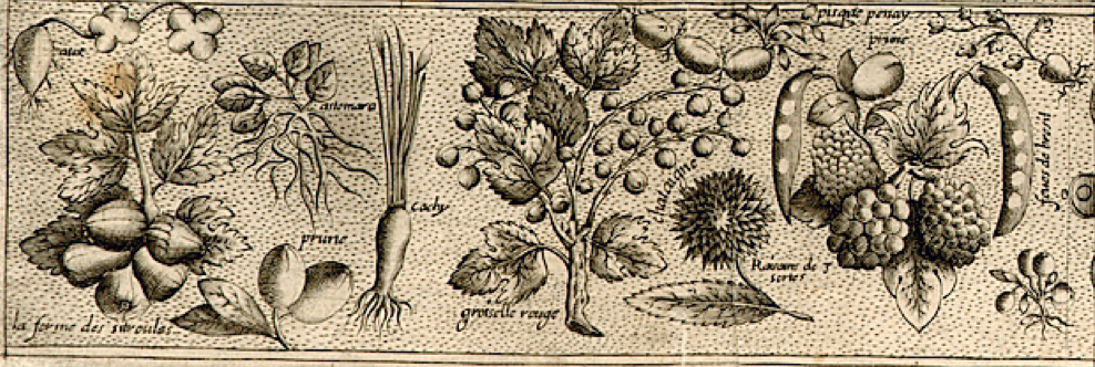 Fruits and Veggies from New France