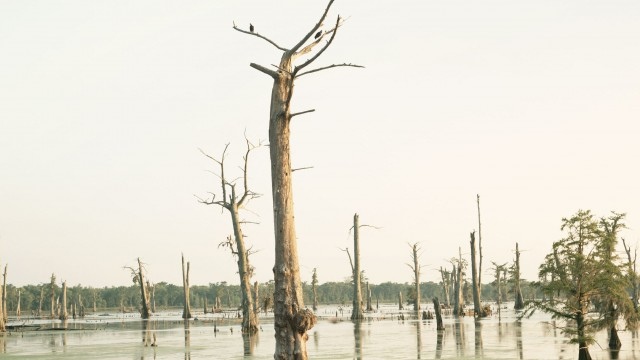 CypressSwamp1-1.resized-e1364970905919