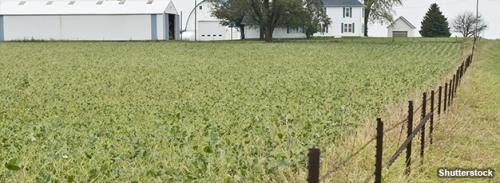 Farming Subsidized Corn