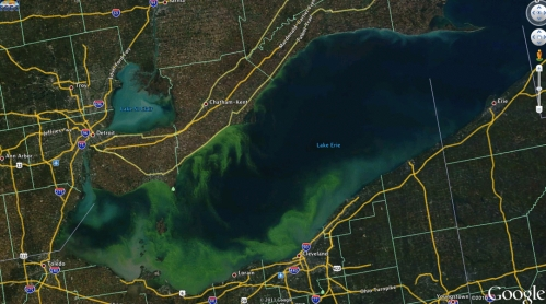 Algea on Google Earth
