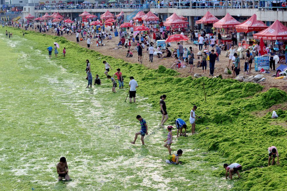 floraison-massive-algues-vertes-chine