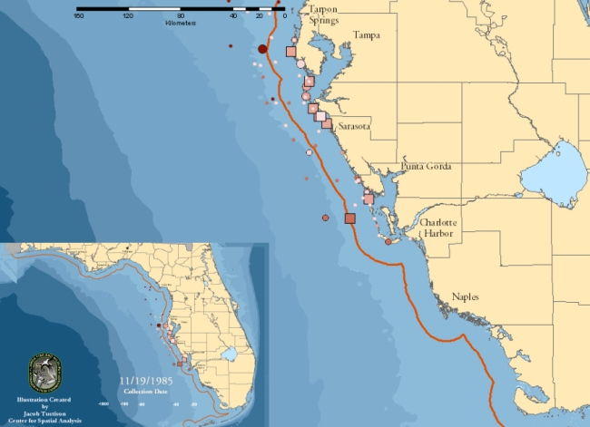 Florida Marine carina 1995