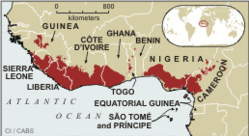 Guinean Forests