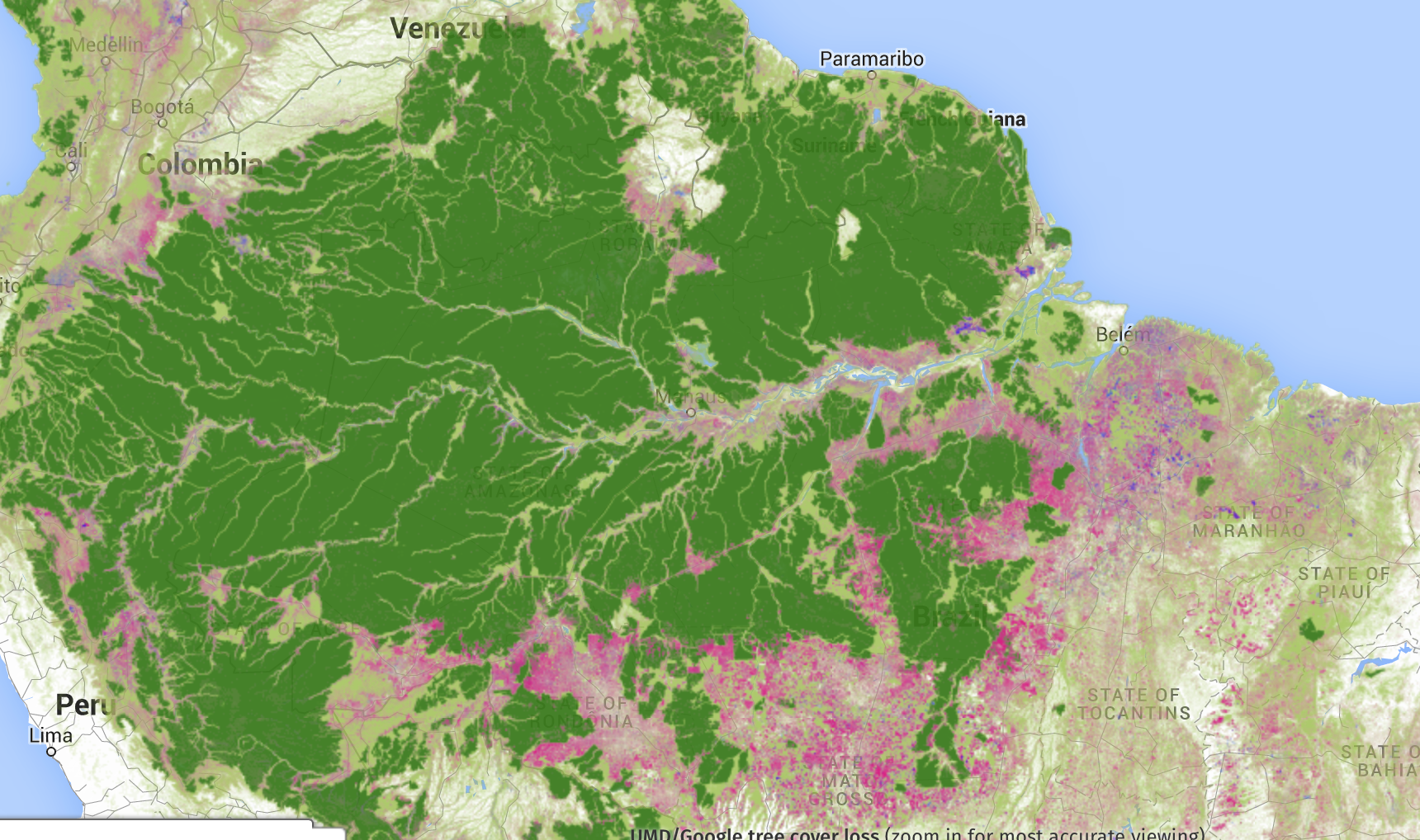 2000 forest cover  brazil amazonia