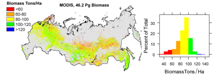 biomass forests Russian Fed