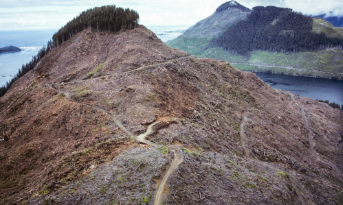 British Columbia Clearcut:Garth Lentz