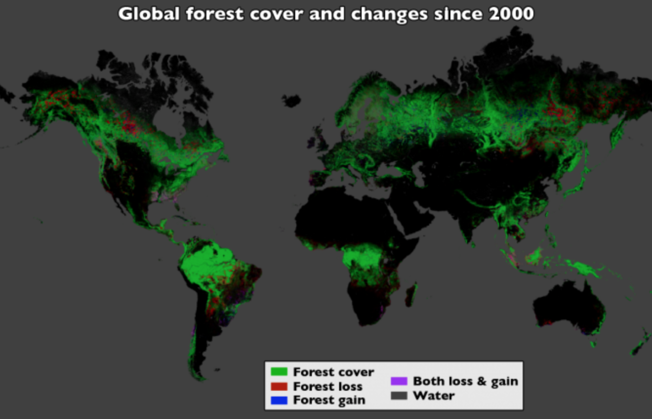 forest loss since 2000