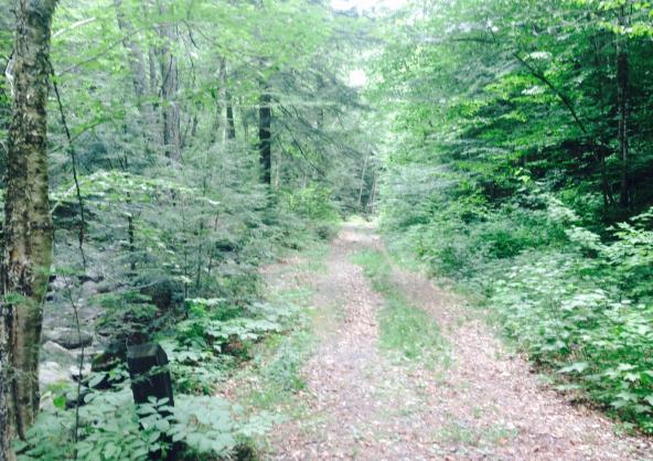 warren trail at falls