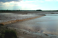 Tidal Bore Salmon River