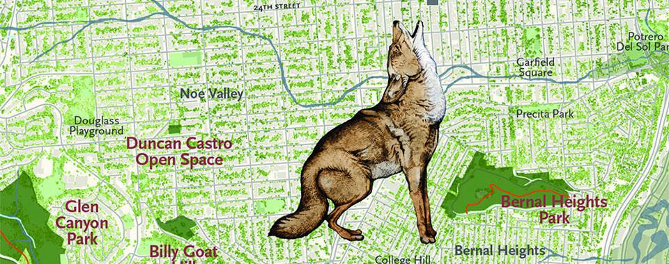 Wolf Bernal Heights-banner