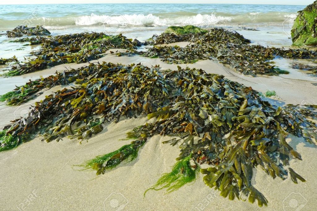 Freezing Time, Seaweed, and the Biologic Imaginary